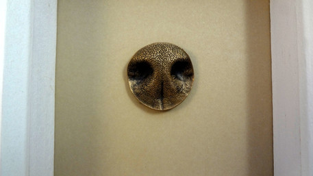 Bronze Pet nose framed by Angelcasts