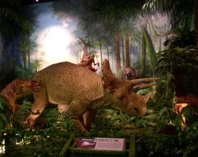 고성공룡2