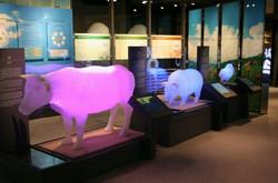 투명 동물모형