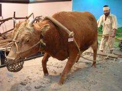 전남농업박물관 (16)