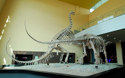 해남공룡 레프리카