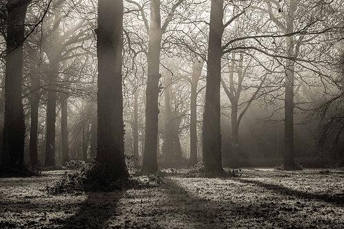 Worcestershire Winter Woodland