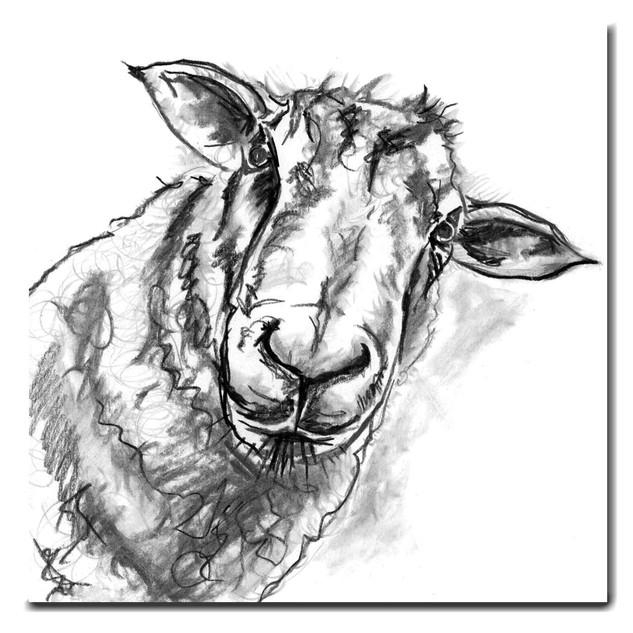 Shelia the Sheep