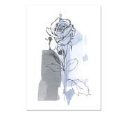 Rose, blue