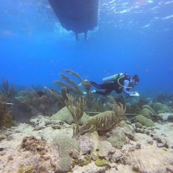 Coral Reef surveys Caribbean