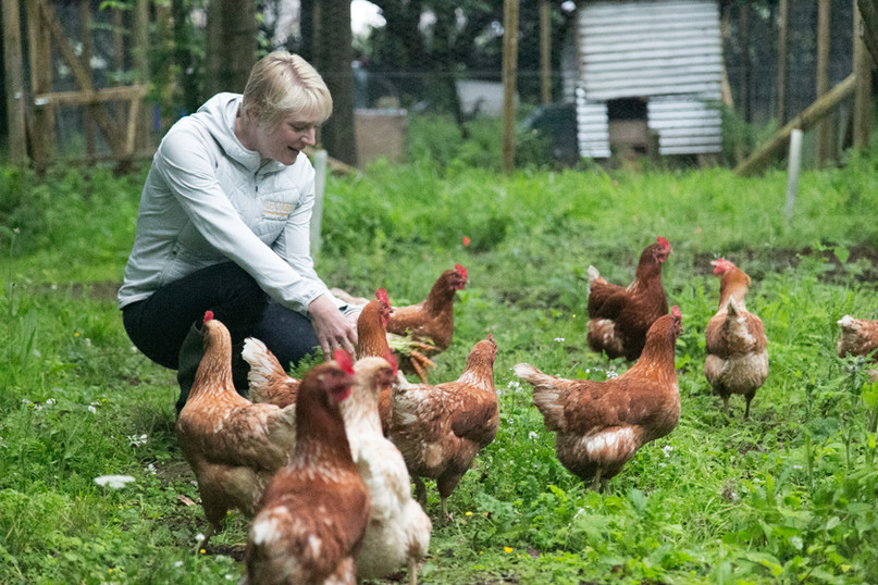 Alex, the hen whisperer (we never knew!)