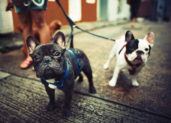 Training your Dog: The shift towards a Positive Reinforcement Framework