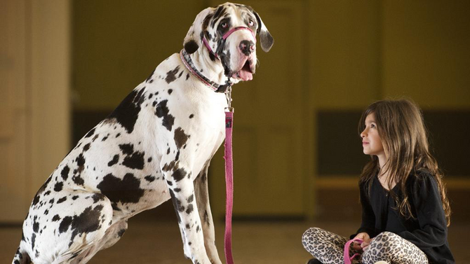 Which Dog Breeds are Best for City or Country Living?
