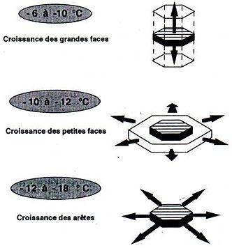 ES DIFFÉRENTS TYPES DE CROISSANCE
