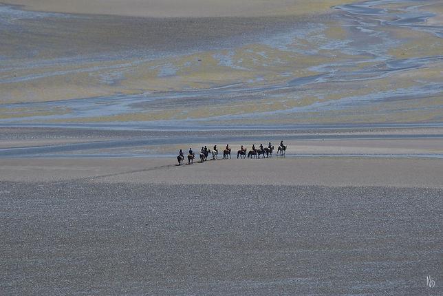 chevaux Baie Natacha Doleux (Copier).jpg