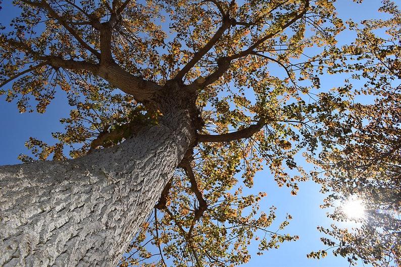 arbre Natacha Doleux (Copier).jpg