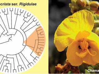 Phylogeny and Divergence Time Estimation of Chamaecrista ser. Rigidulae (Leguminosae, Caesalpinioide