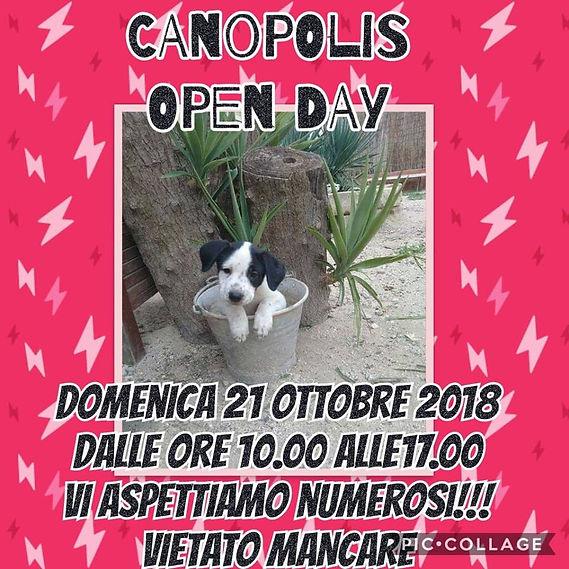 opendaya cnopolis.jpg