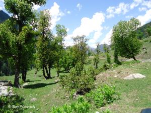 Greenery in Aru Valley