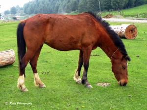 Horse in Aru Valley