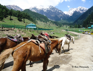 Aru Trek on Horse Back