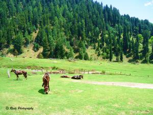 grasslands of Aru
