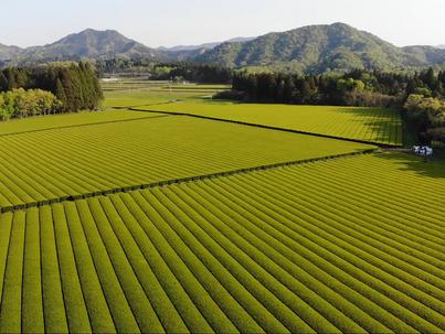2020年10月22日 クローズアップ現代+にて堀口製茶の取り組みが紹介されました