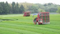 2019年4月14日 新茶の摘み採り、加工が始まりました