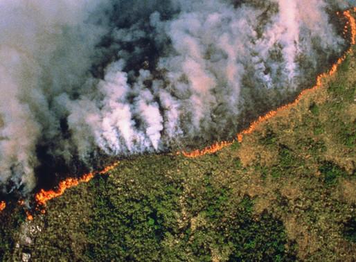AMAZONIE : LES POUMONS DE LA TERRE BRÛLENT