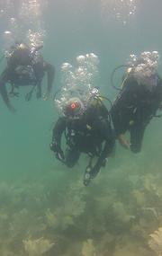 Cursos de mergulho em Cabo Frio