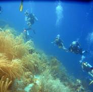 Recifes de coral.