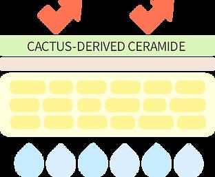 Cactus-derived Ceramide_.png