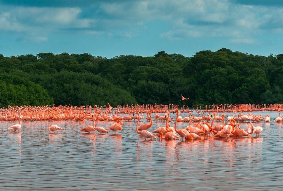 Flamingos Watching