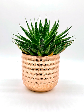 Luxury copper finish candle holder, recycled to hold a plant