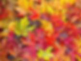 fall wrap.jpg