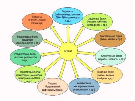Белки и аминокислоты
