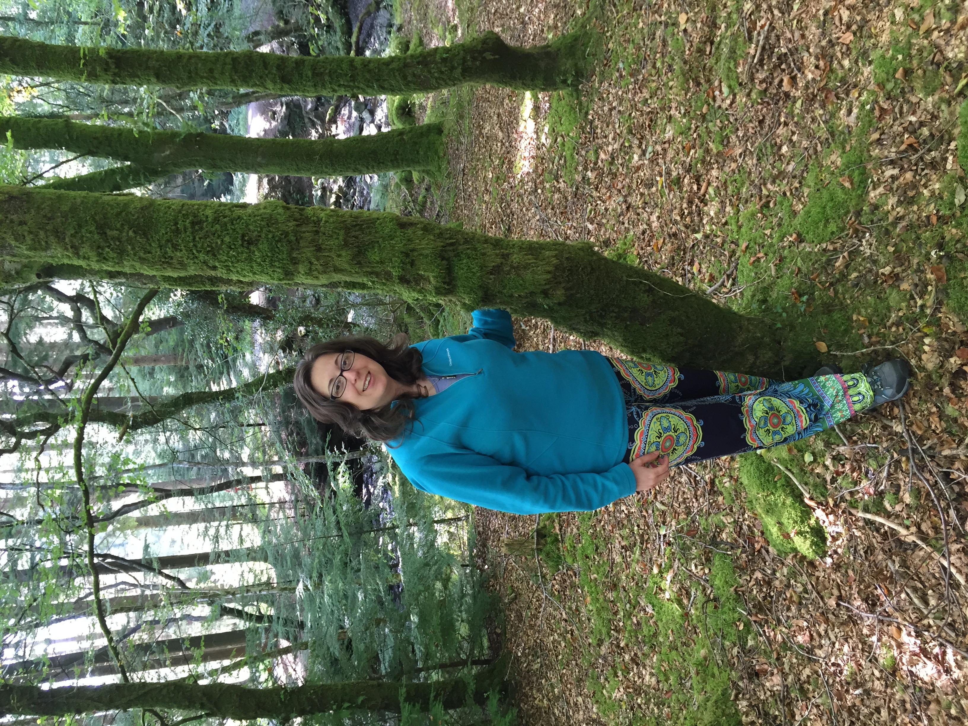 In Beddgelert Forest