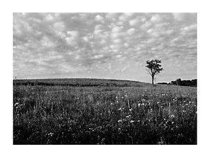 Cirrus Tree – Lyon County, Kansas