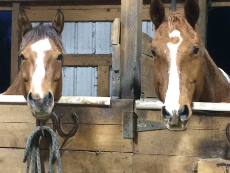 Why is Equine Therapy Essential During COVID-19?