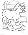 Pony .png