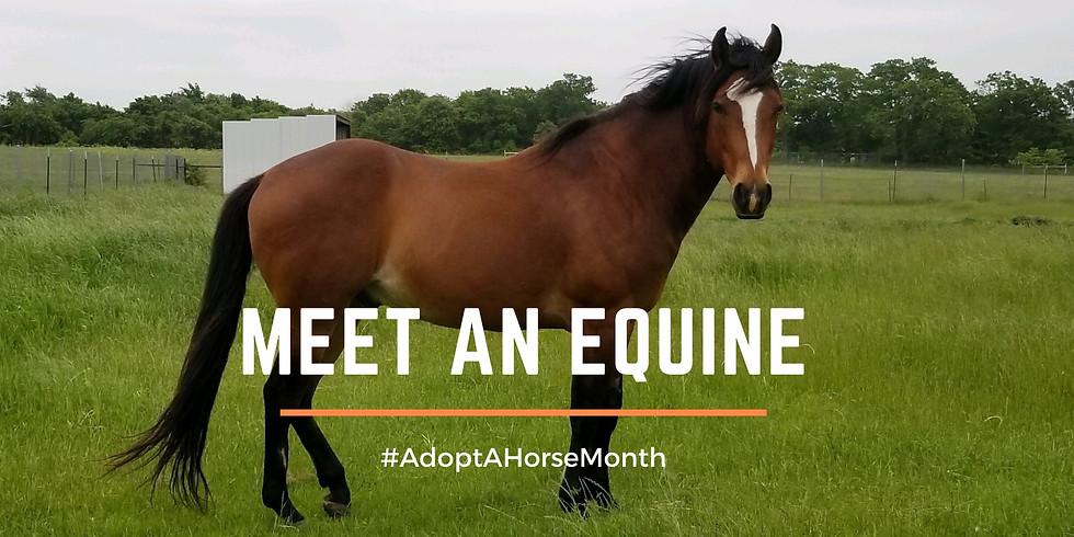 Meet an Equine: Adopt a Horse Month