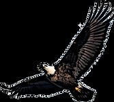 eagle fertig3.png