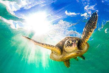 sea turtle, dolphin tour, destin banana boat, dolphin tour destin, destin fl dolphin tour, dolphin cruise