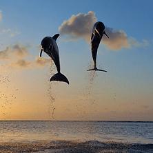 dolphin cruise destin, banana boat rides, destin dolphin tour