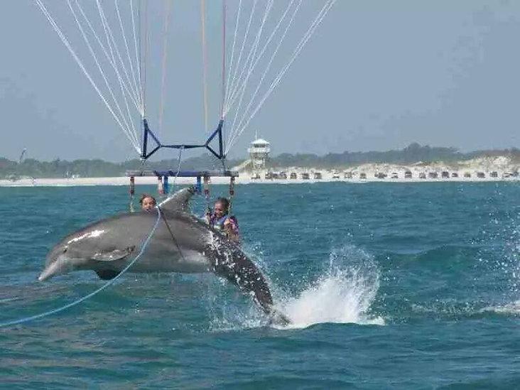 dolphin cruise destin, parasail in destin florida, fort walton beach parasailing, jetski dolphin tour, destiny water adventures, island watersports, fudpuckers watersports