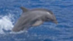 dolphin cruise in destin, destin banana boat, banana boat rides