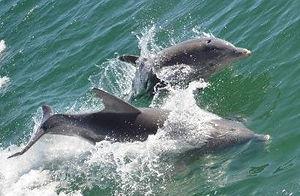 destin dolphin cruise, banana boat rides destin, dolphin tour destin, jetski tour destin, dolphin tour in destin fl, banana boat destin, destin florida banana boat