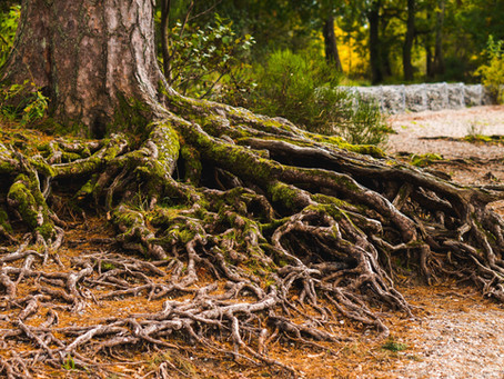 Rooted in Worship