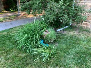 Tending Our Garden