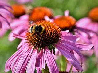 Native Plants - God's Creation in Delaware