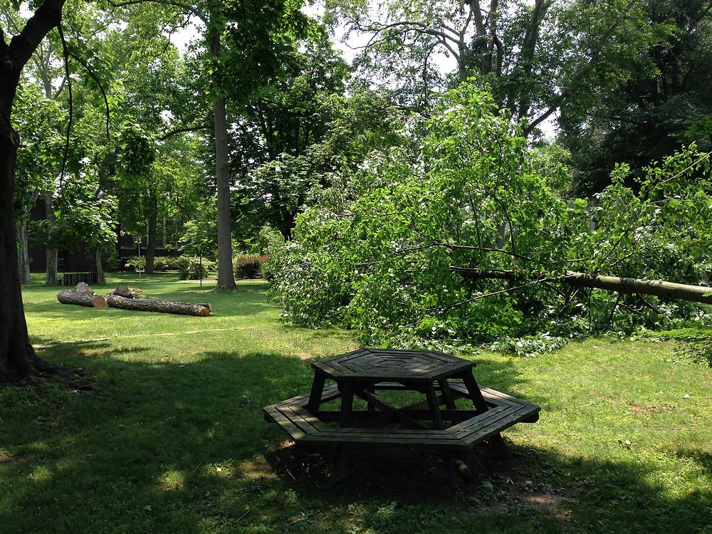 dianne garden.JPG