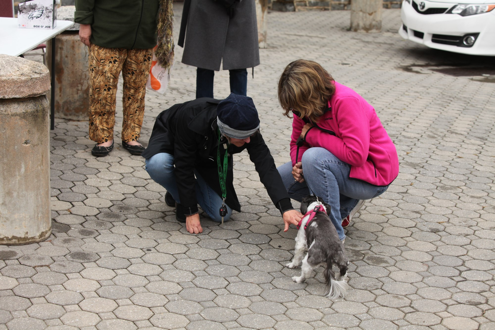 2015 Blessing of the Animals