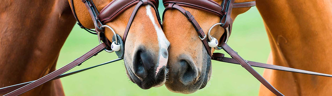 South Canterbury Saddlery Trust Bits New Zealand NZ