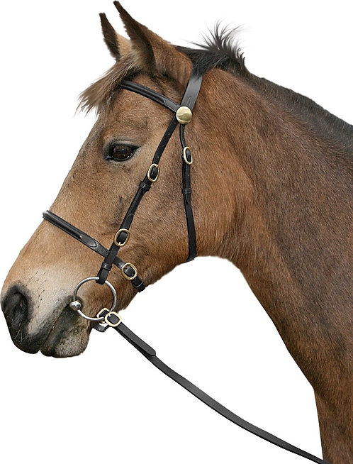 CAVALLINO INHAND BRIDLE WITH LEAD