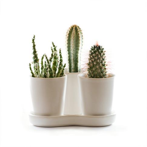 Vasos Decorativos com Cactos